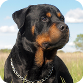 Rottweiler HD Live Wallpaper icon