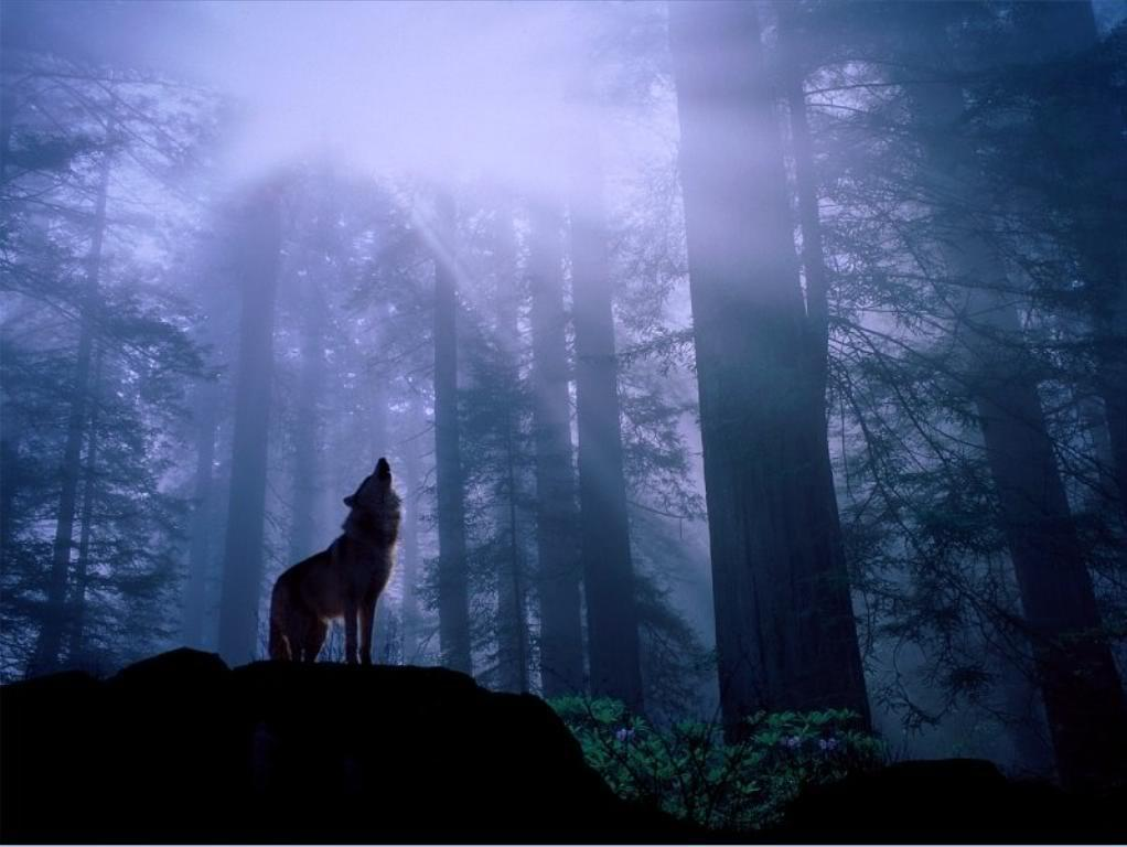 Dark Forest Wolf Wallpapers for Android - APK Download
