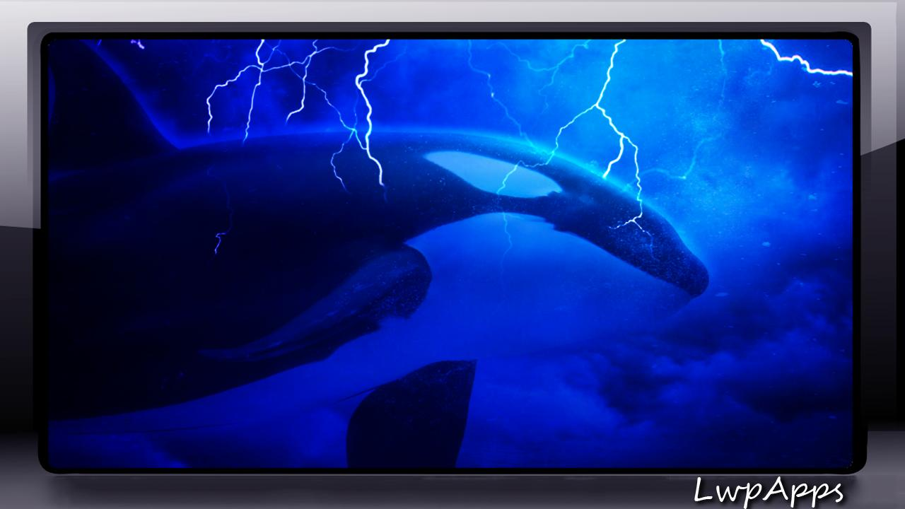Orca Wallpaper For Android Apk Download