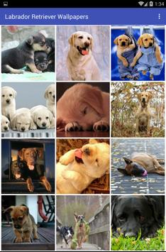 Labrador Retriever Wallpapers apk screenshot