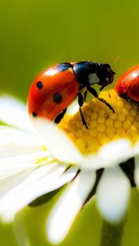 Ladybug Live Wallpaper screenshot 4