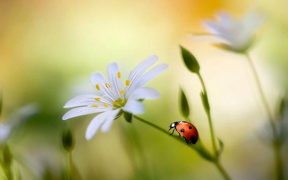 Ladybug Live Wallpaper screenshot 5