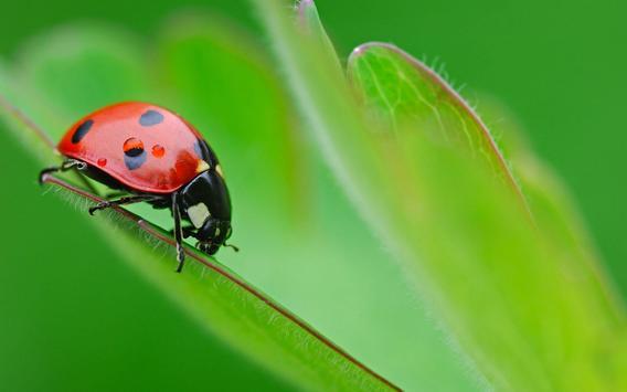 Ladybug Live Wallpaper screenshot 6