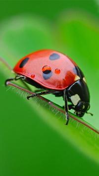 Ladybug Live Wallpaper poster