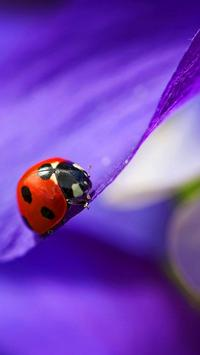 Ladybug Live Wallpaper screenshot 1
