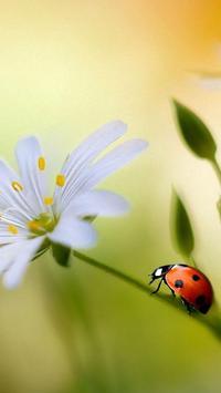 Ladybug Live Wallpaper screenshot 2