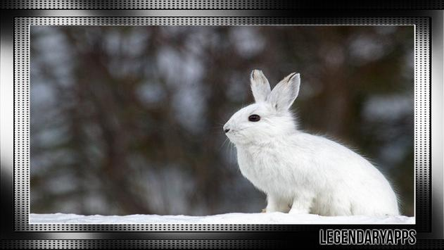 Bunny Wallpaper screenshot 2