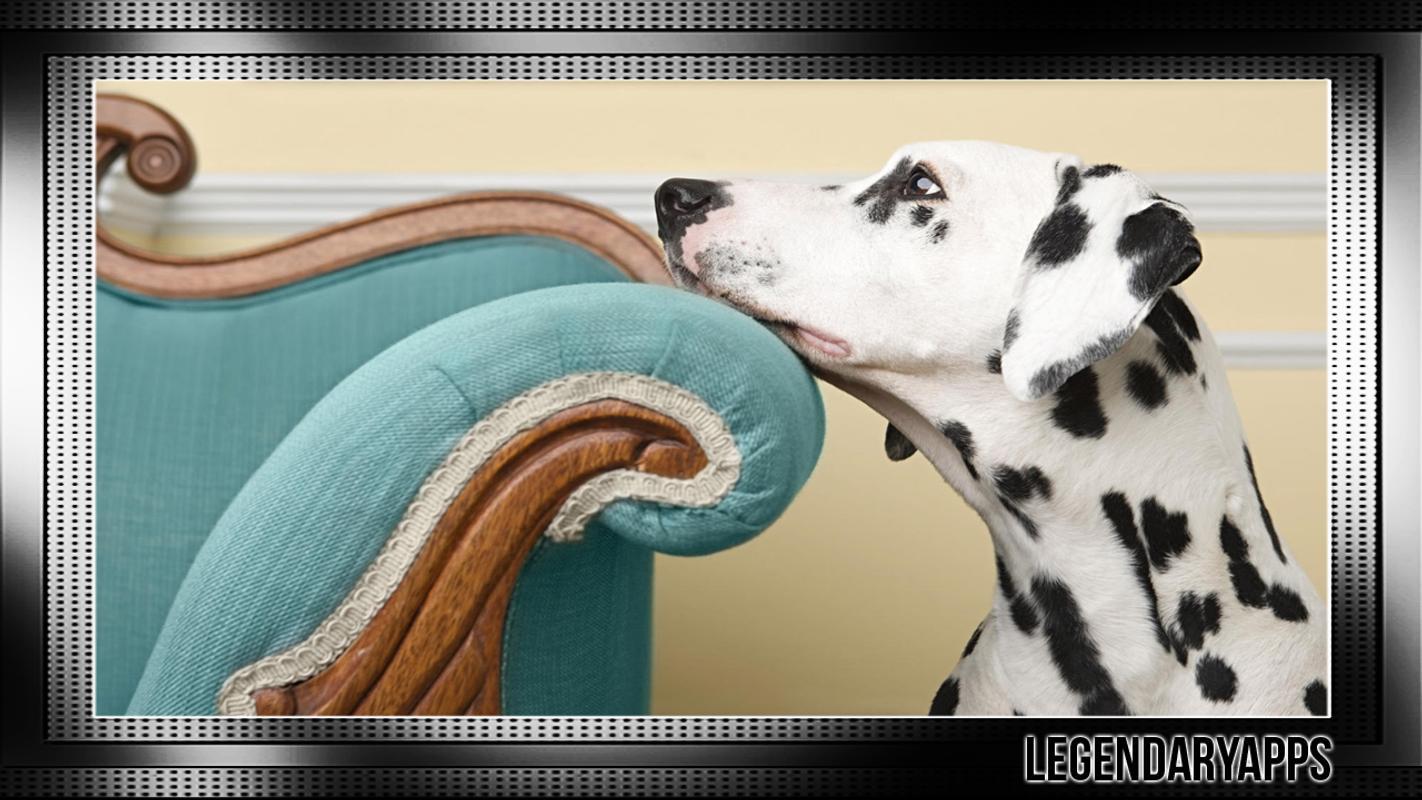Dalmatian Wallpaper APK Download
