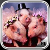 Little Pig Wallpaper icon