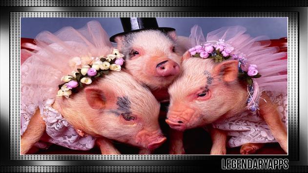 Little Pig Wallpaper screenshot 2