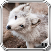 Polar Fox Wallpaper icon