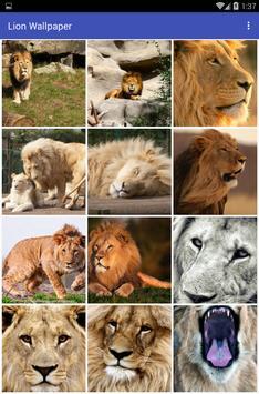 Lion Wallpaper poster
