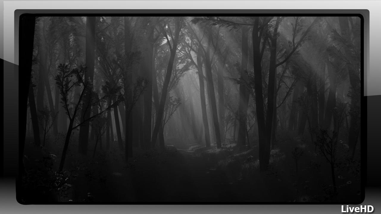 Dark Forest Wallpaper For Android Apk Download