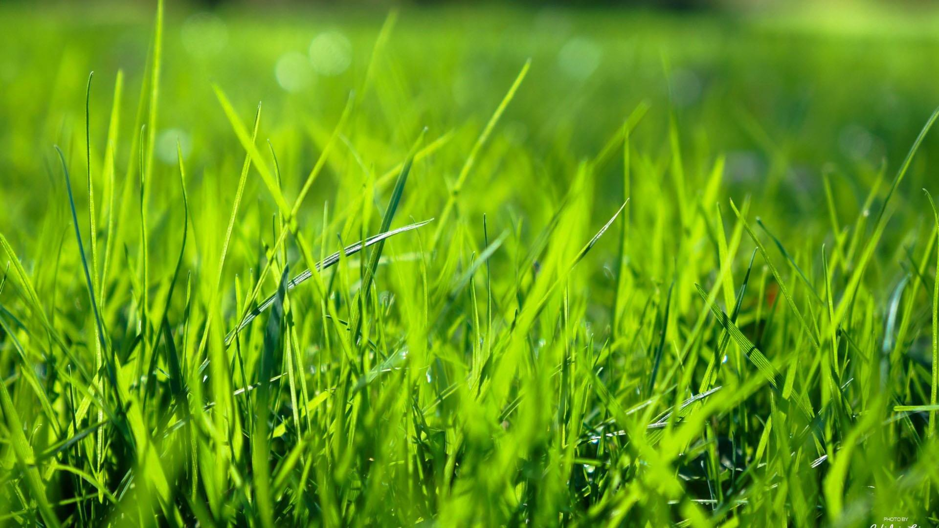 Fresh green grass.Wallpaper for Android - APK Download