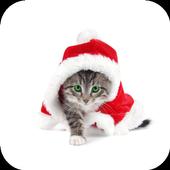 Christmas cats.Live wallpaper icon