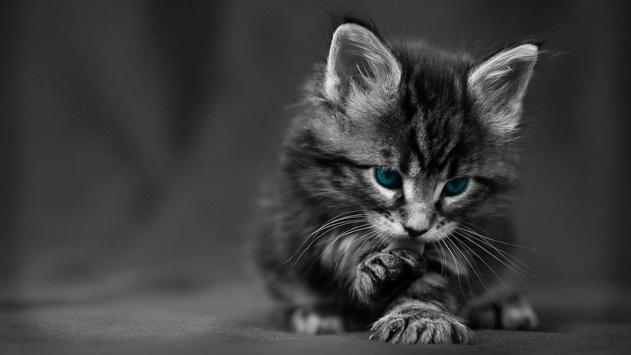 Kittens.Cute friends.Wallpaper apk screenshot
