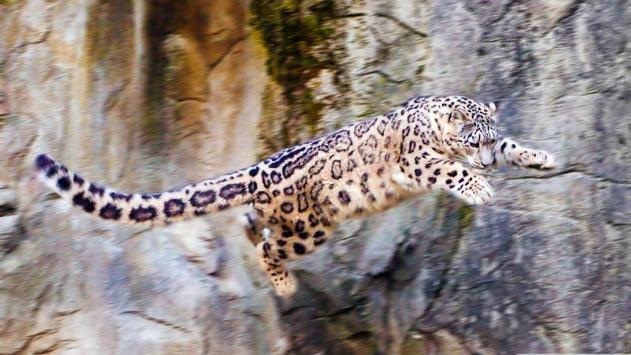 Wildlife. Great snow leopard apk screenshot