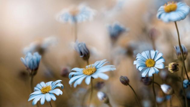 Light blue flower.  Wallpaper apk screenshot