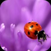 Flower and ladybug. Wallpaper icon