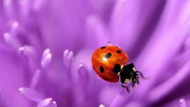 Flower and ladybug. Wallpaper poster