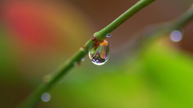 Macro. Water drops. Wallpaper screenshot 1