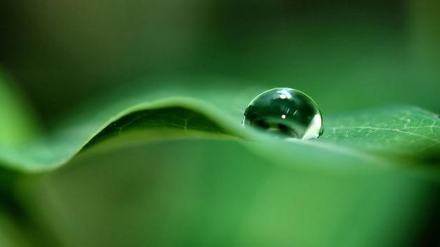 Macro. Water drops. Wallpaper screenshot 2