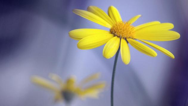 Yellow flowers. Live wallpaper poster