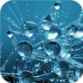 Water drops and flowers icon