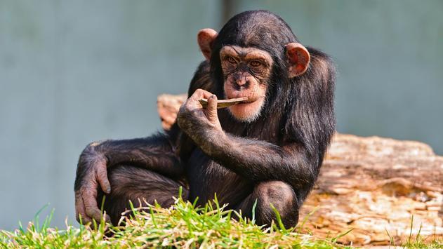 Monkey life. Live wallpaper स्क्रीनशॉट 5