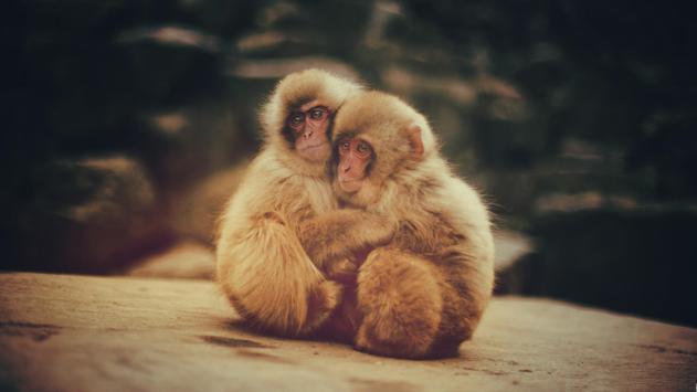 Monkey life. Live wallpaper स्क्रीनशॉट 3