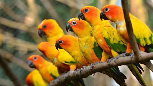 Parrots. Live wallpaper apk screenshot