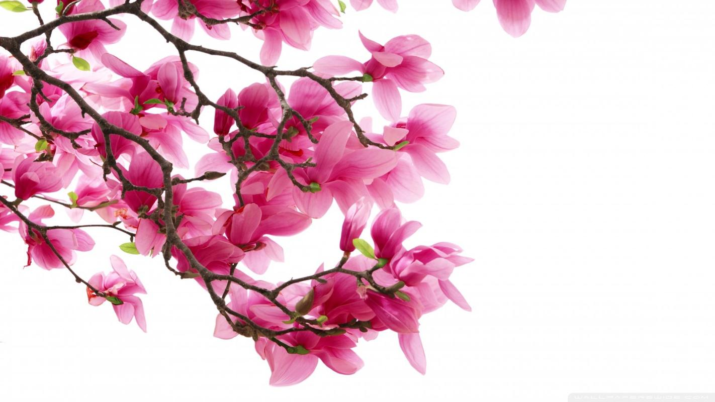Lovely Pink Flowers For Android Apk Download