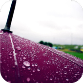 Umbrella. Live wallpapers icon