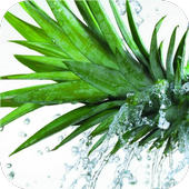 Fruits in water LiveWallpapers icon