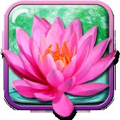 Bunga Teratai Gambar Animasi APK Download Gratis