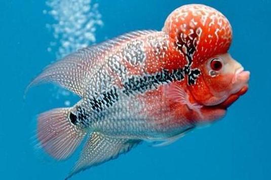 Louhan Fish Gallery screenshot 7