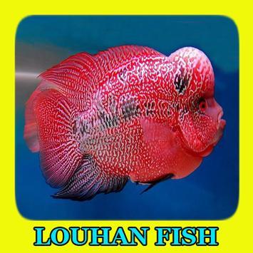 Louhan Fish Gallery poster