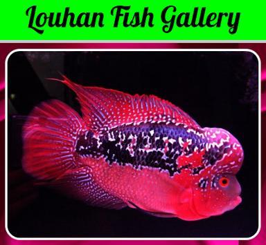 Louhan Fish Gallery screenshot 1