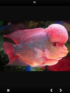 Louhan Fish Gallery screenshot 2
