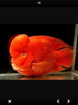Louhan Fish Gallery screenshot 3