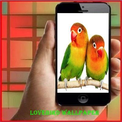 58 Wallpaper Romantis Burung HD