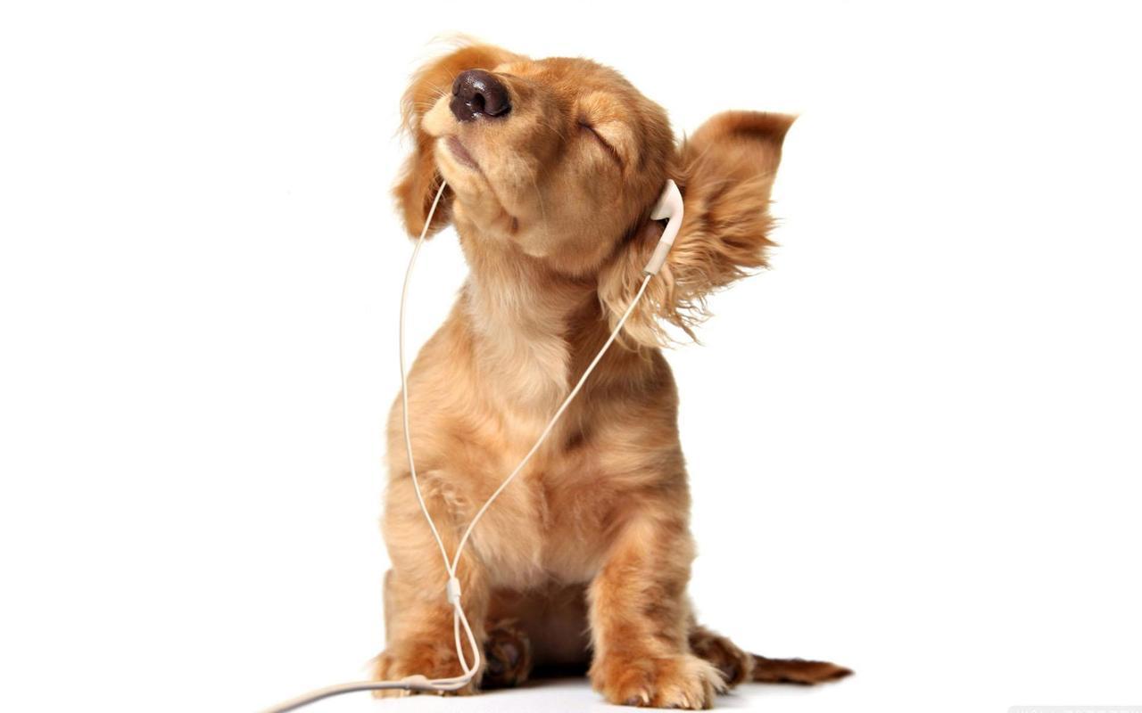 Perritos Fondos Animados Cachorros Lindos For Android Apk Download