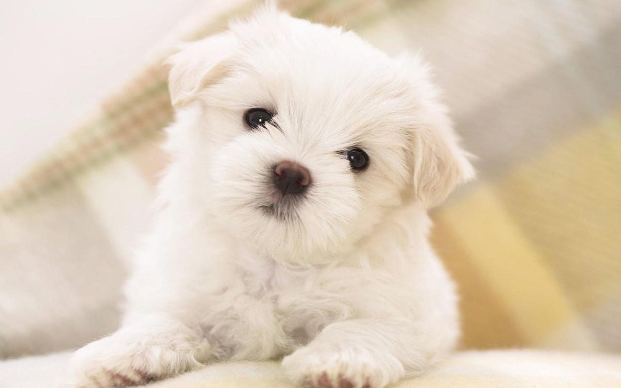 Cachorros Fondos Animados Perritos Lindos For Android Apk Download