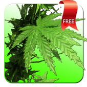 Weed 3D Live Wallpaper icon