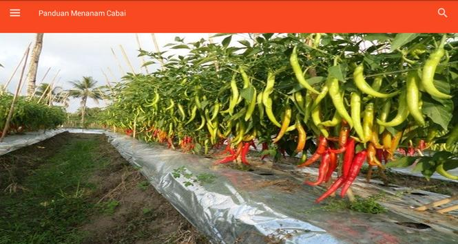 Guide to Planting Chili screenshot 1