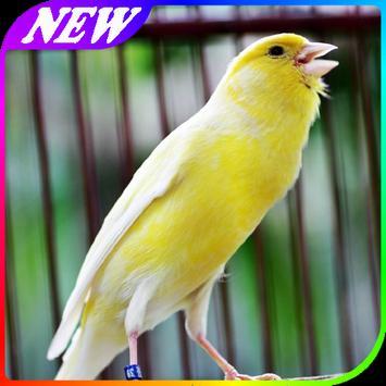 Panduan Merawat Burung Kenari apk screenshot