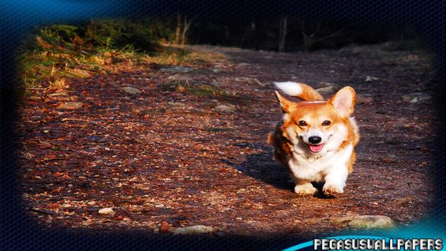 Corgi Wallpaper screenshot 1