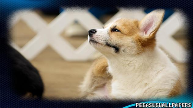 Corgi Wallpaper screenshot 2