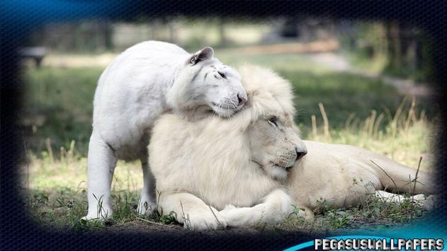 White Lion Pack 2 Wallpaper poster