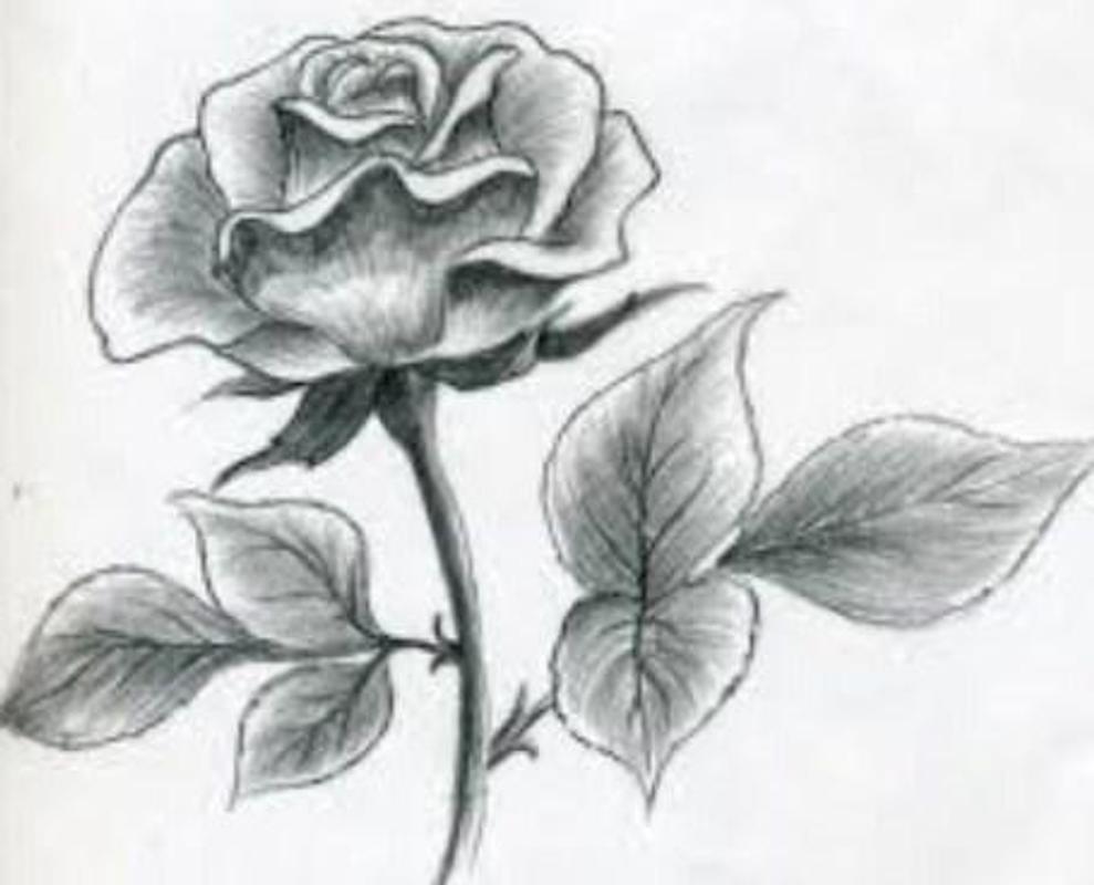 Pencil sketch drawing ideas screenshot 2